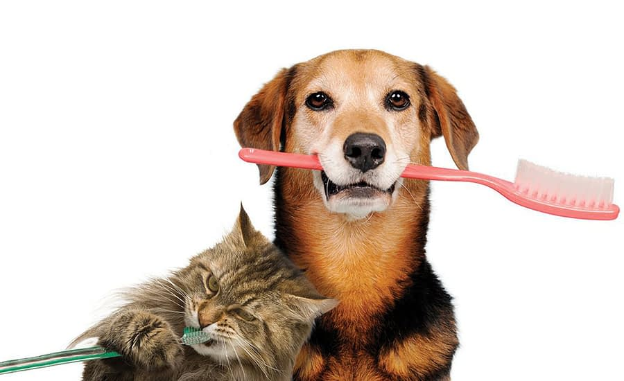 Overview on Oral Pet Health