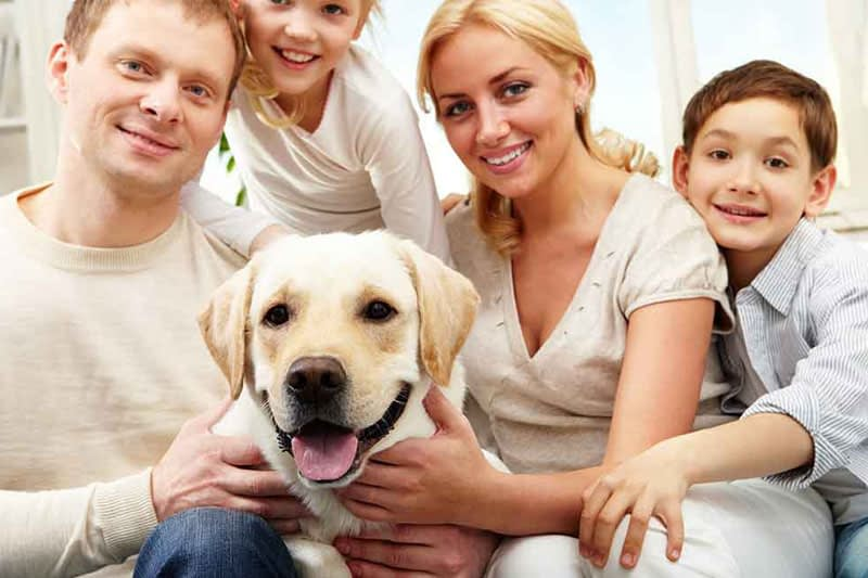 Boosting your Health with Pets