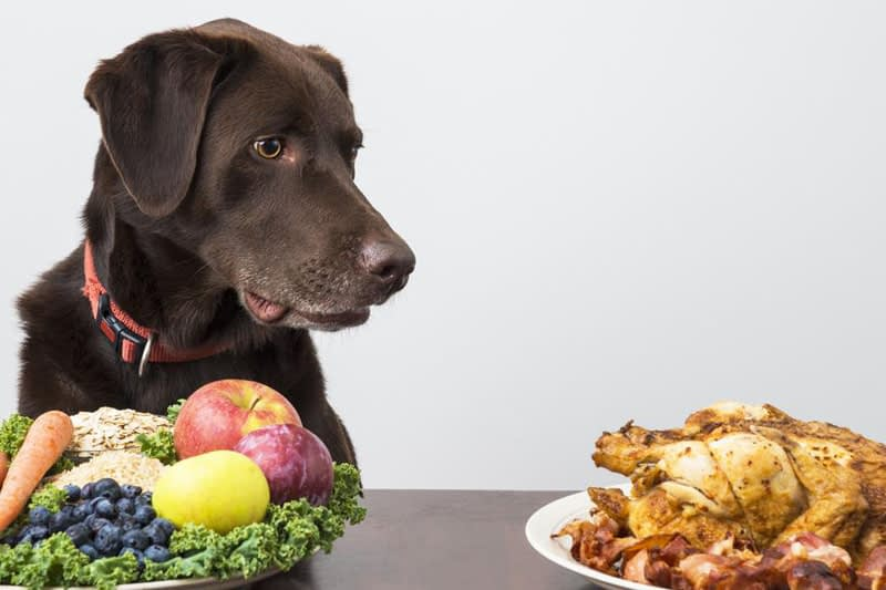 Important Basics of Nutrition for Dogs: