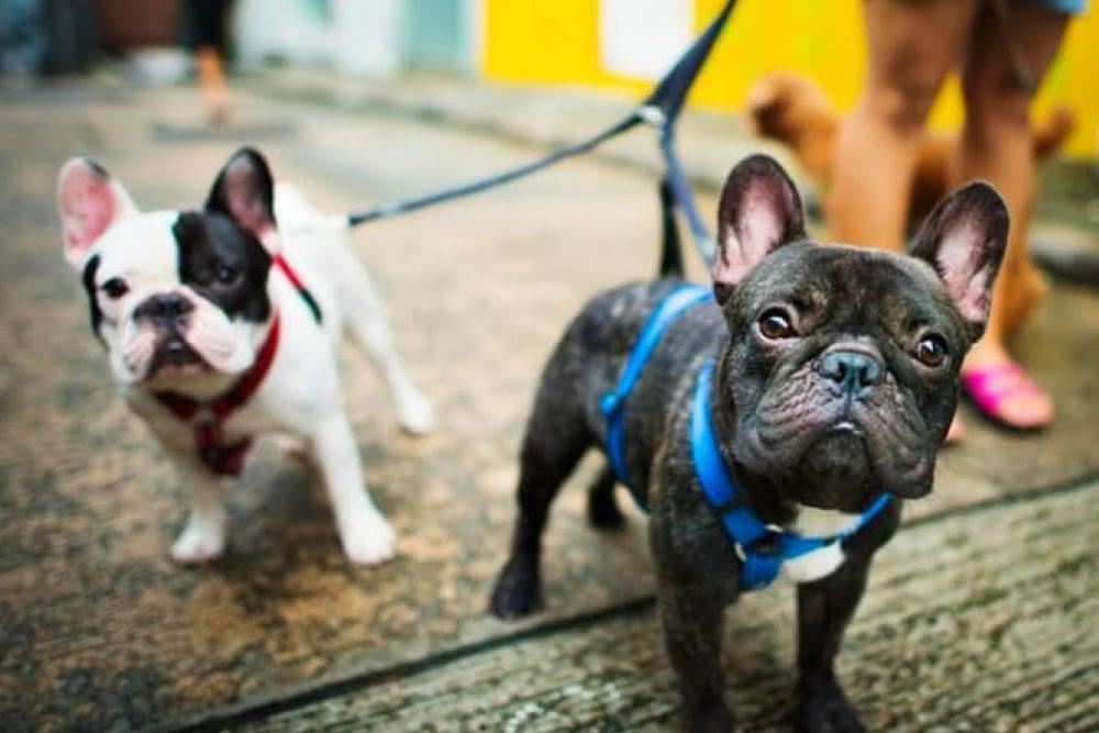 Top 7 Amazing Dog Walking Tips